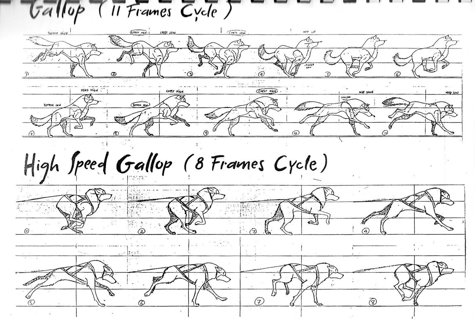 Dog run cycle for animation.