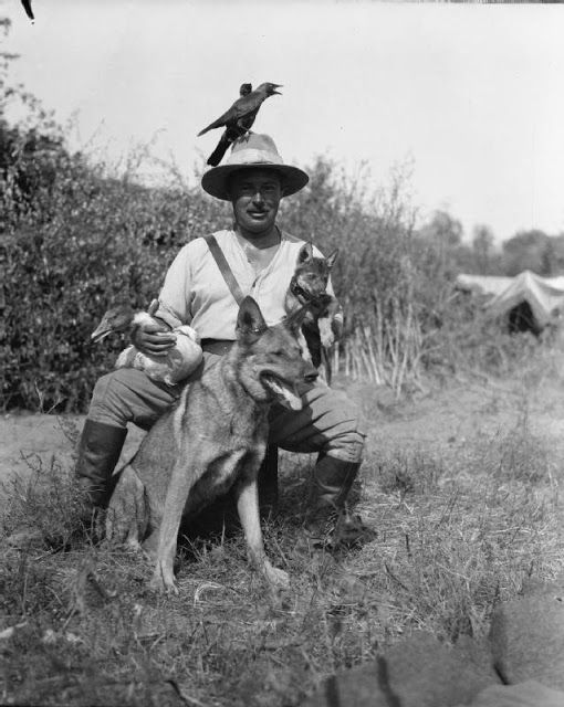A British Officer of the Army Veterinary Corps in Salonika with his pets which include two jackdaws, a wild goose,a wolf cub and an Alsation dog - World War I
