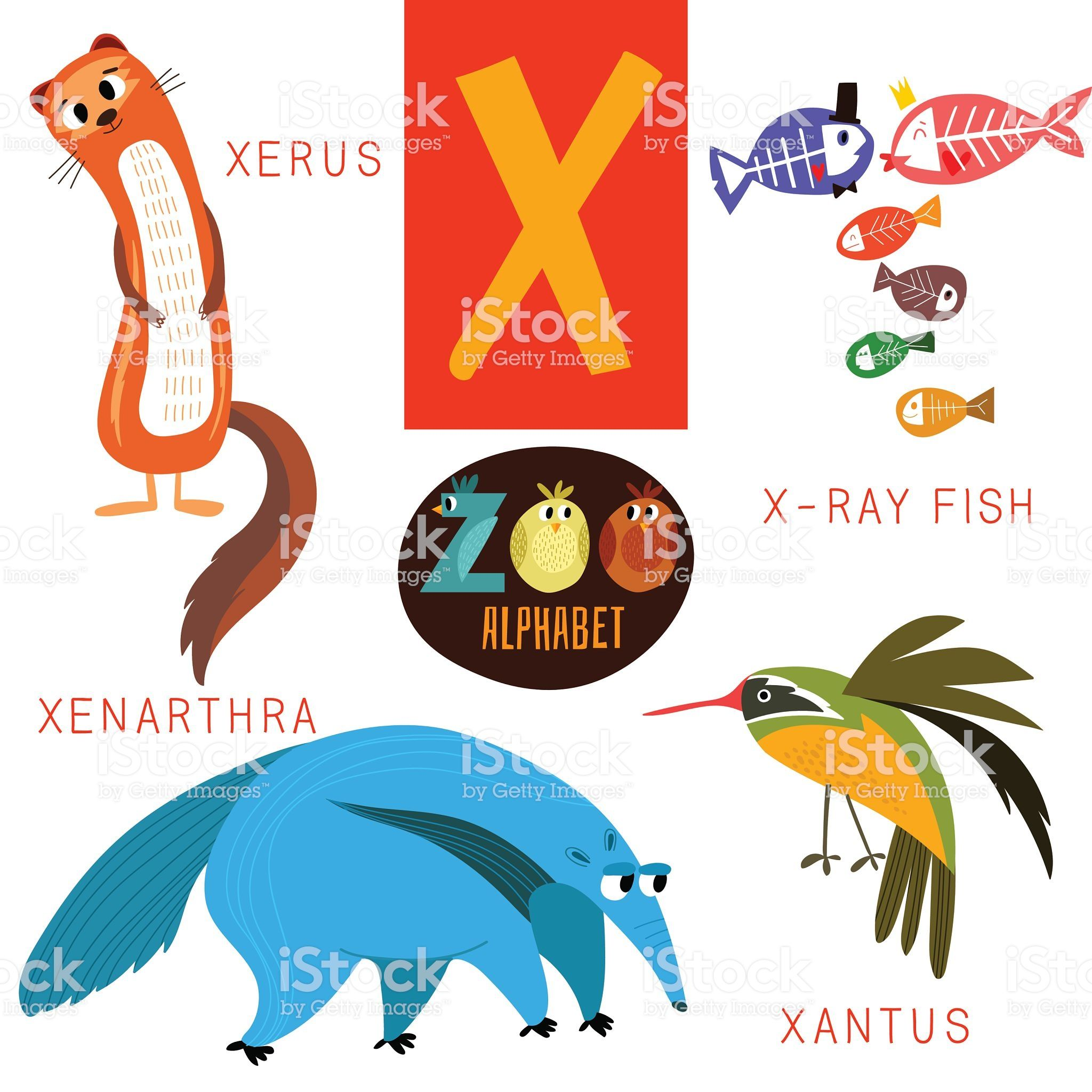 Cute Zoo Alphabet In Vector X Letter Funny Cartoon In 2020 Cartoon Animals Alphabet Funny Cartoon