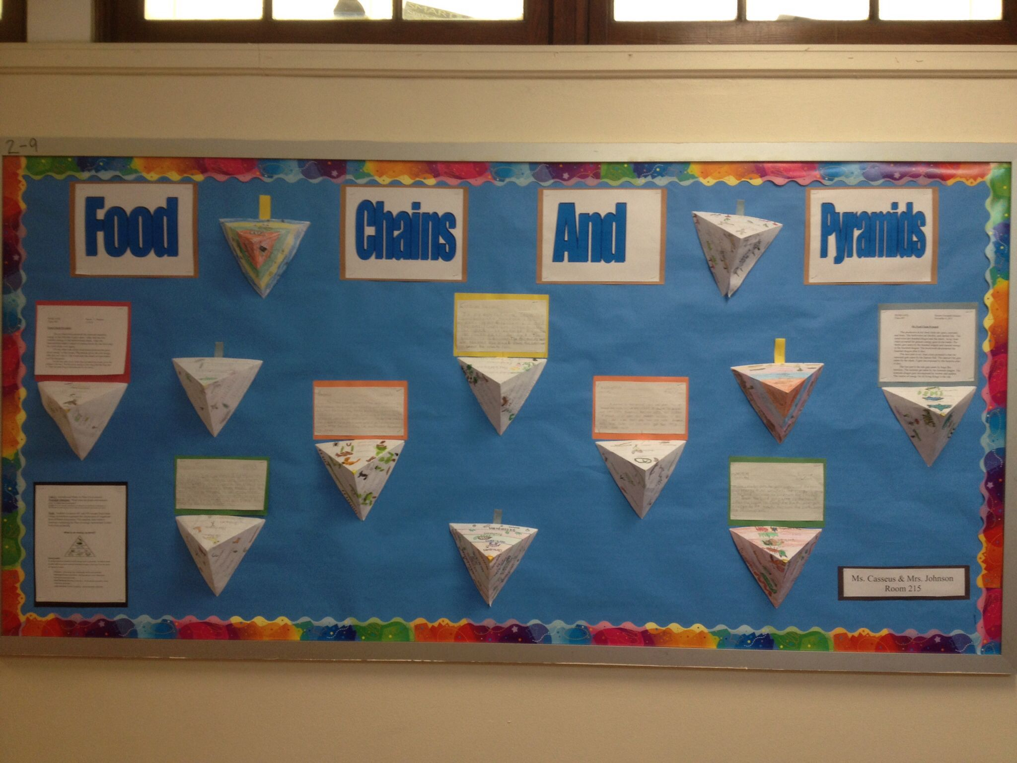 Food Chain Energy Pyramid Bulletin Board