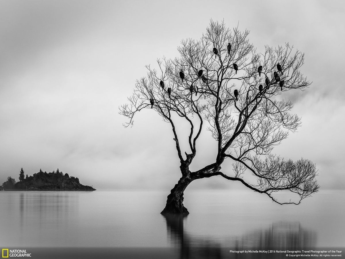 Undoubtedly one of the most photographed trees in the