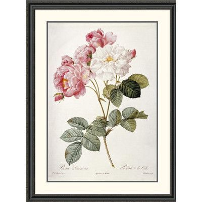 """Global Gallery Damask Rose by Pierre Joseph Redoute Framed Painting Print Size: 46"""" H x 34.73"""" W x 1.5"""" D"""