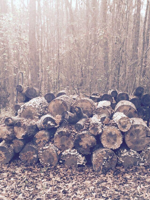 Photo of Hay algo sobre una pila de leña lista para las hogueras de invierno …