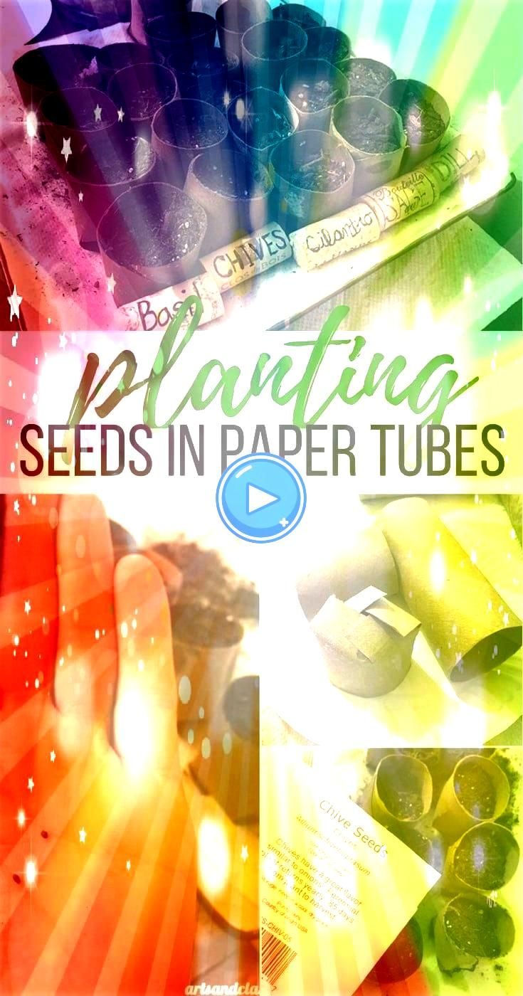 start an herb garden with this paper tube seed planting technique Follow How to start an herb garden with this paper tube seed planting technique Follow How to start an h...