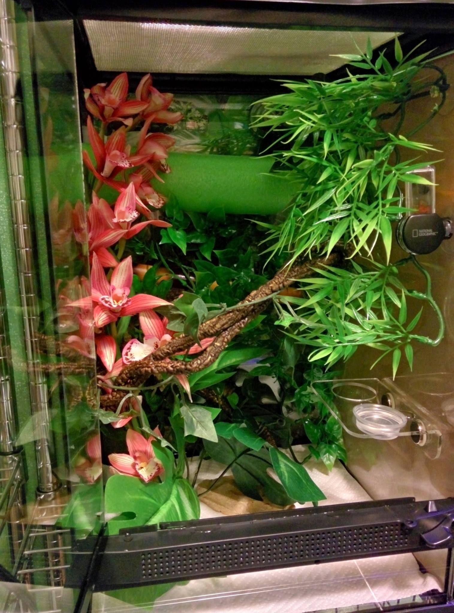 12x18 Zoo Med Tank Setup For Crested Gecko Pool Noodles