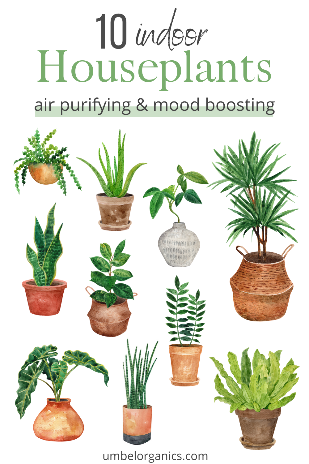 10 Air Purifying House Plants in 2020 Air purifying