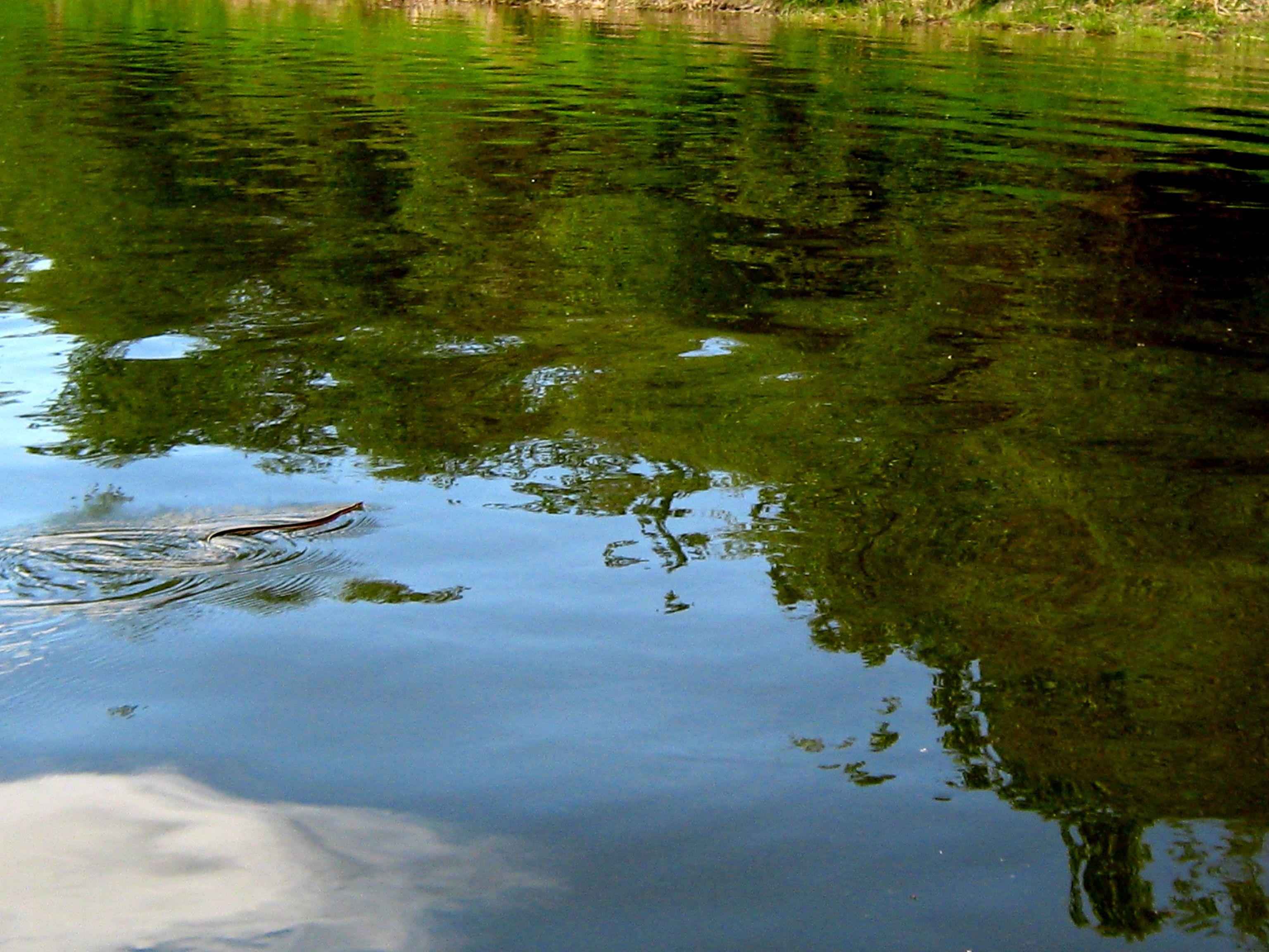 Marathon Rowing: Nechako River; the swimming snake