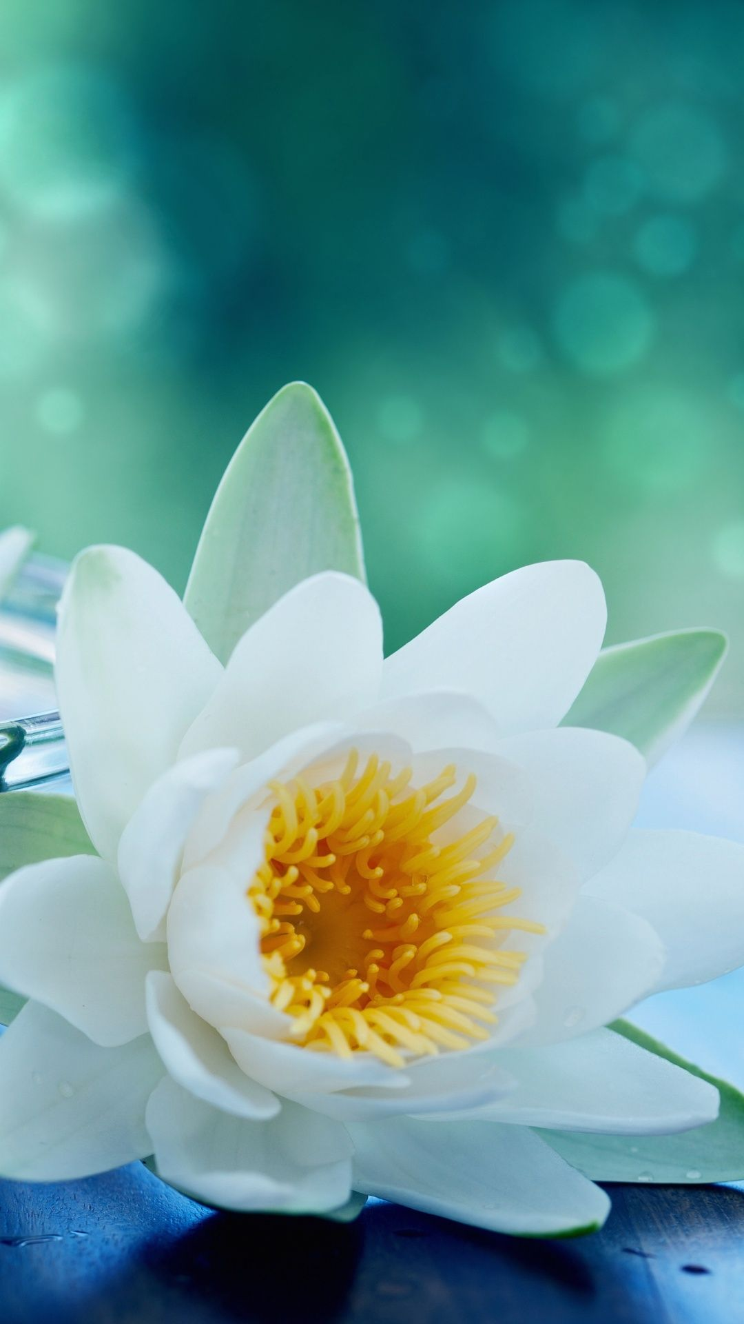 White lotus flower for the love of dogs pinterest white white lotus flower izmirmasajfo Image collections