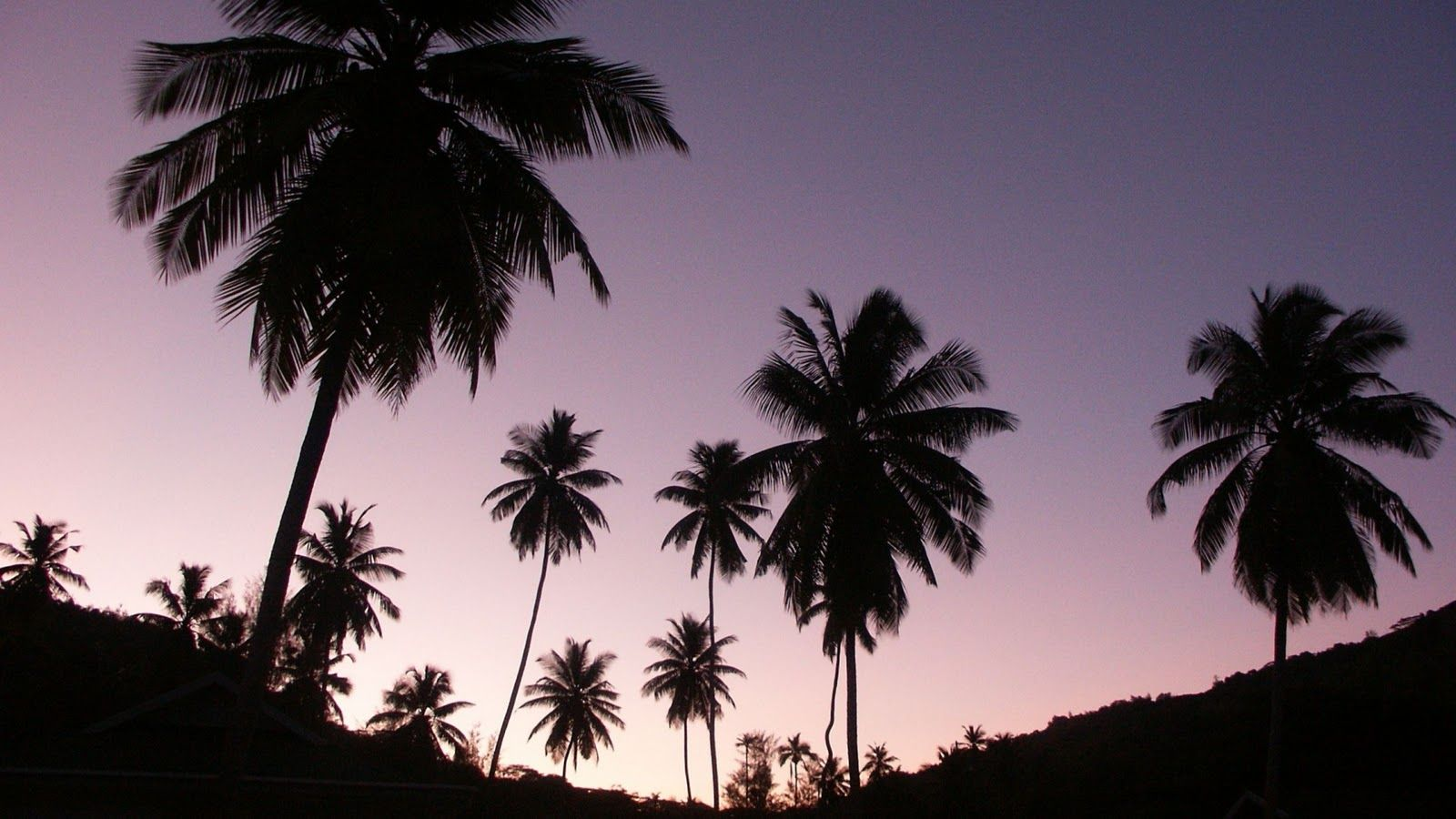 Blackpalmtreesilhouettes Jpg 1 600 900 Pixels Palm Trees Wallpaper Desktop Wallpapers Tumblr Tree Desktop Wallpaper