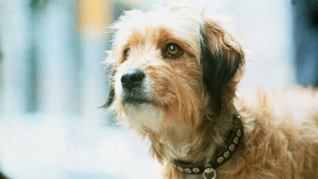 25 Famous Dogs That Stole Our Hearts Famous Dogs Dogs Scruffy Dogs