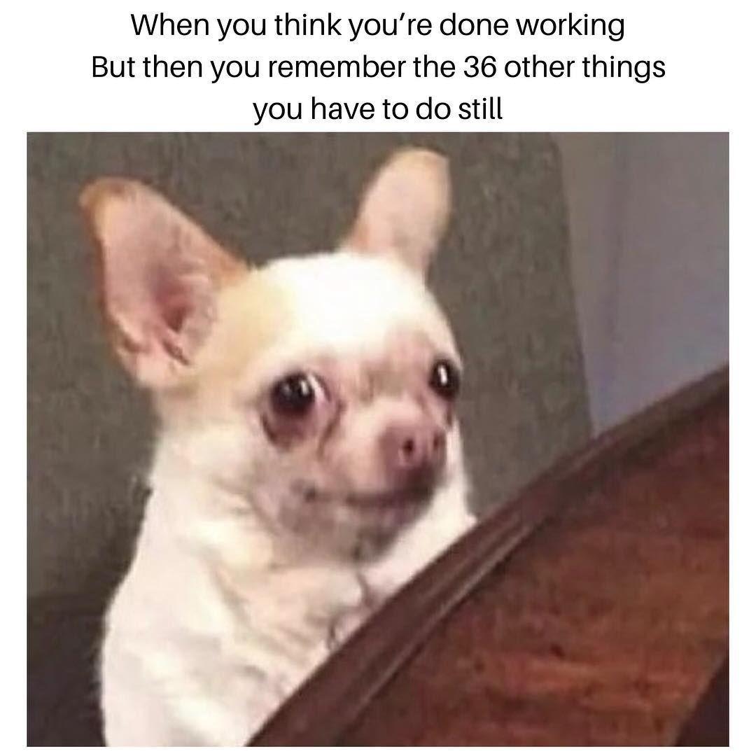 Busy Busy Busy Busylife Meme Doggo Writersproblems Christianfiction Romanticsuspense Author Writer Elizabethgodd Funny Memes Funny Puns Image Memes