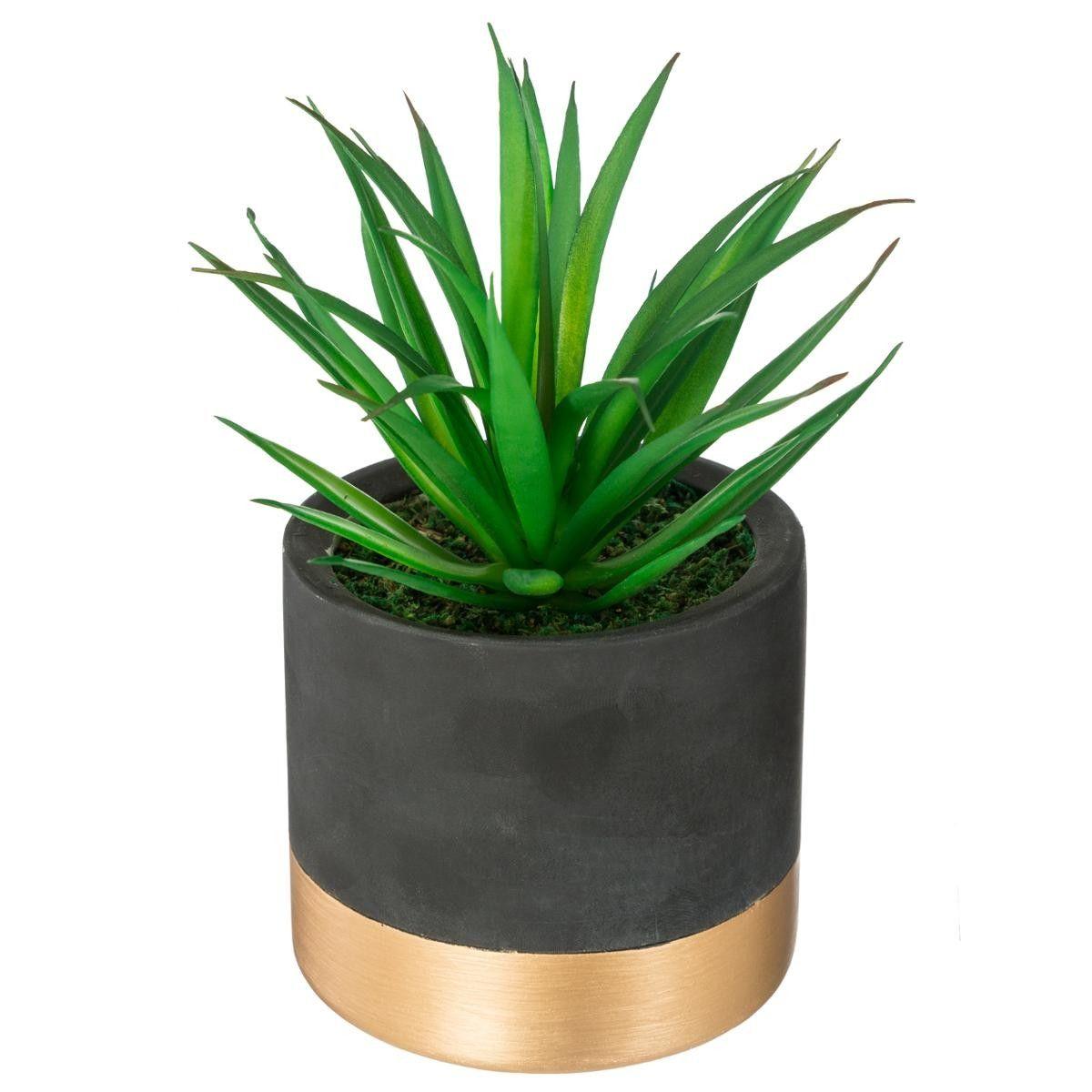 Pot De Plante Pas Cher plante verte & pot en ciment doré h18 en cours - atmosphera