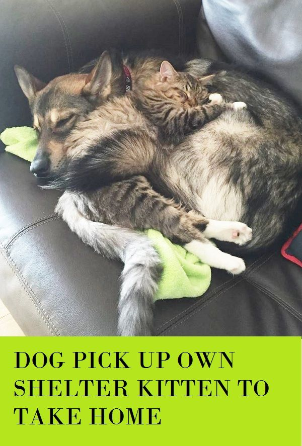 Dog Picks Out Her Own Shelter Kitten To Take Home Dog Pick Shelter Kitten Home Cute Animals Shelter Kittens Funny Animals