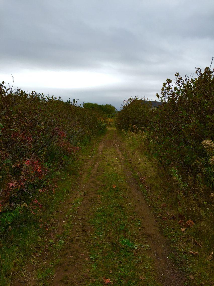 Path Not Taken..,
