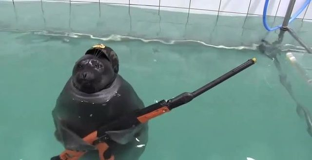 Seals With Guns