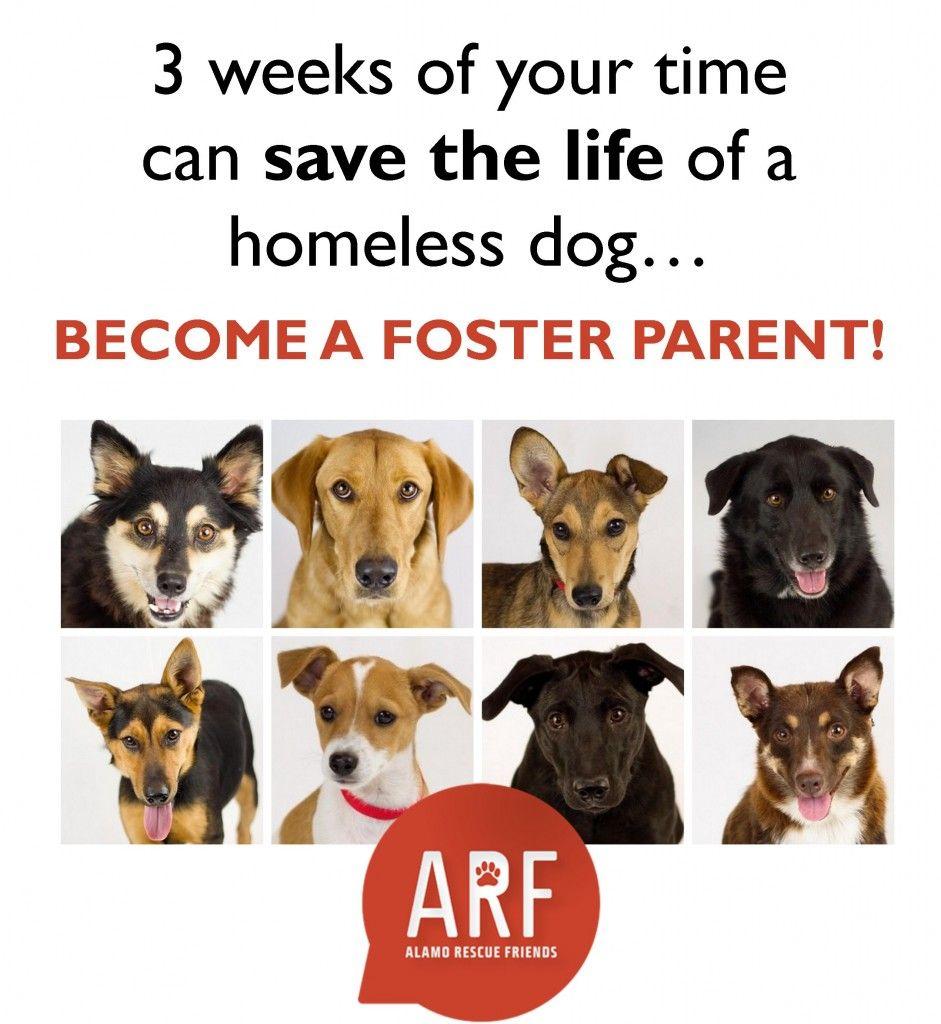 ARF Foster Poster