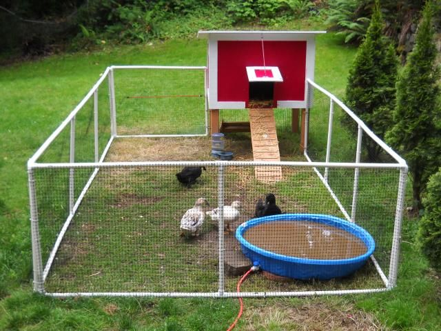 Don 39 t want a chicken coop i want a duck coop duck for Chicken and duck coop