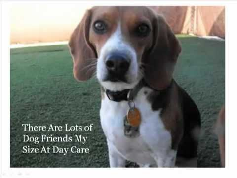 Just Like Home Serves The Las Vegas Nv Area With Overnight Dog Boarding Professional Dog Grooming And Dog Day Care Find Out Mo Dogs Dog Friends Dog Boarding