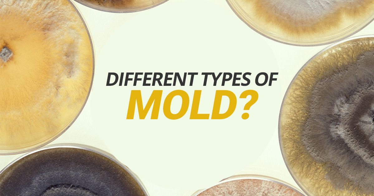 What Are The Different Types Of Mold Types Of Mold Mold
