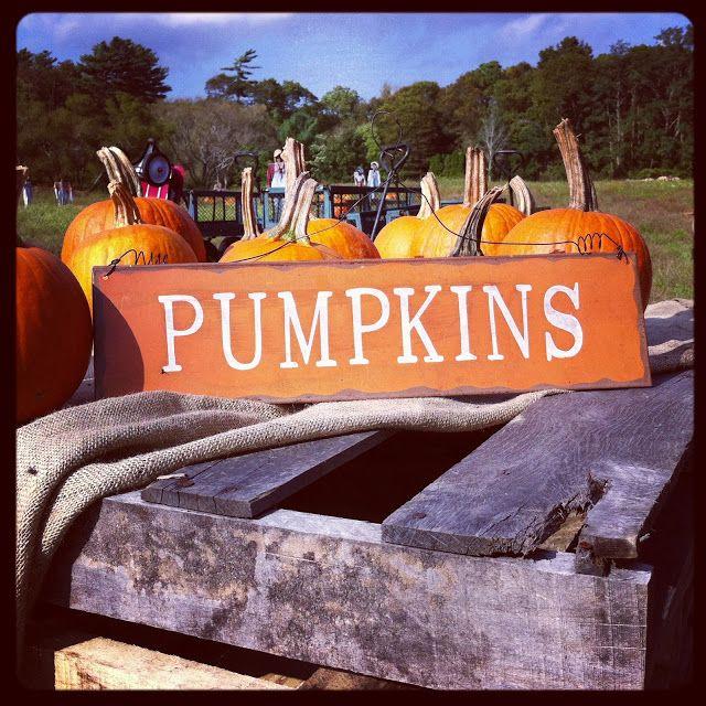 Pumpkins with Benefits Boost Your Flock's Health