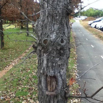 Oh my! Where are my glasses? Have you seen my glasses? Where- oh... they're on my head Tree Face