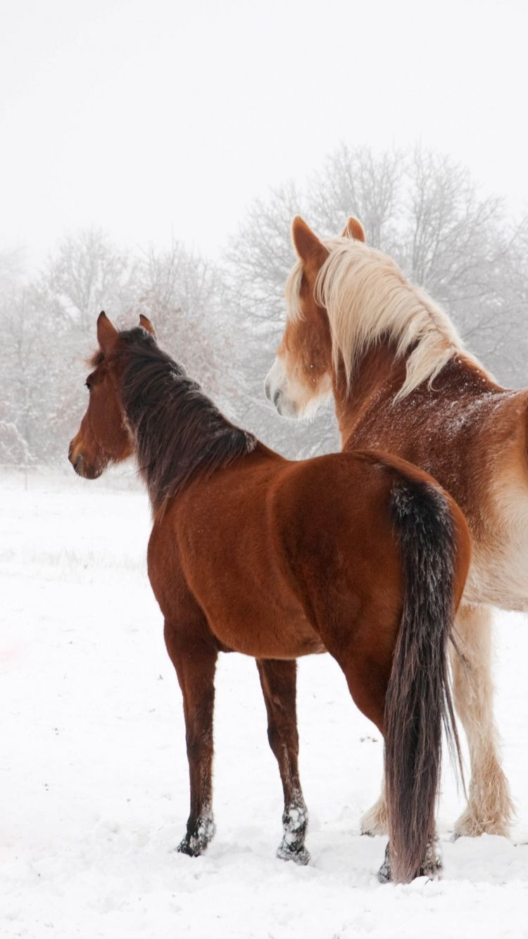 Top Wallpaper Horse Winter - 7fb274edea211f9259b93e1f9011f658  Graphic_394274.jpg