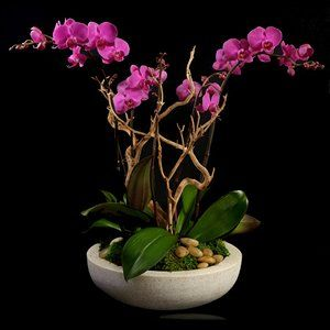 Pin By Miss H Duque On Ideas Orchid Arrangements Orchid Planters Artificial Flower Arrangements Orchids