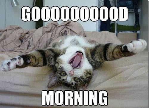 Kitty Says Good Morning Good Morning Meme Funny Good Morning Memes Morning Memes