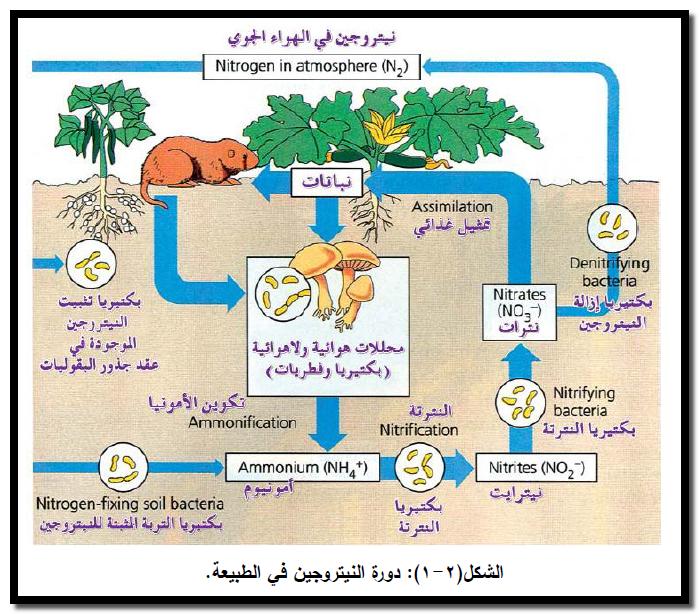 الكيمياء الحياتية دورة الكربون دورة النيتروجين دورة الفسفور فى الطبيعة Chemistry Nitrogen