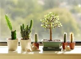 Resultado de imagem para como faser um faso para bonsai reciclado