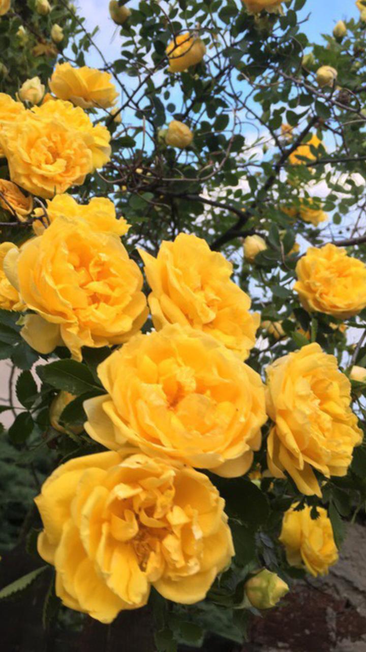 lockscreen Tumblr Желтые цветы, Цветы, Милые обои