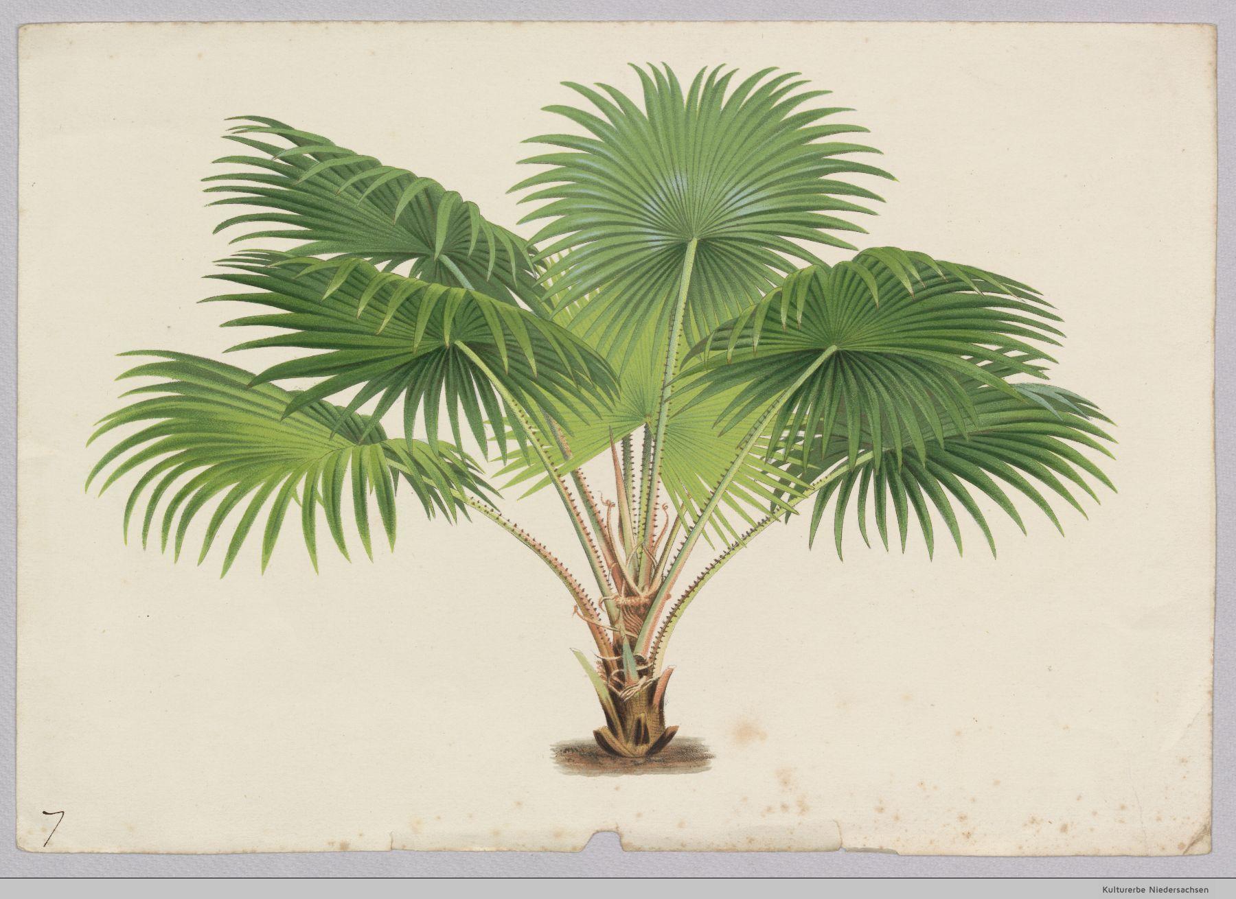 Pin de Heea en botanicals | Pinterest | Palmeras