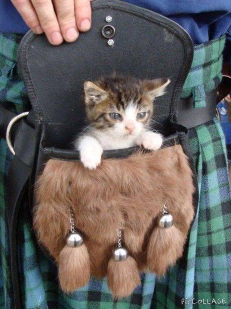 How Cute Is A Tartan Kitty In The Sporran Katten En Kittens Katten Schattige Dieren