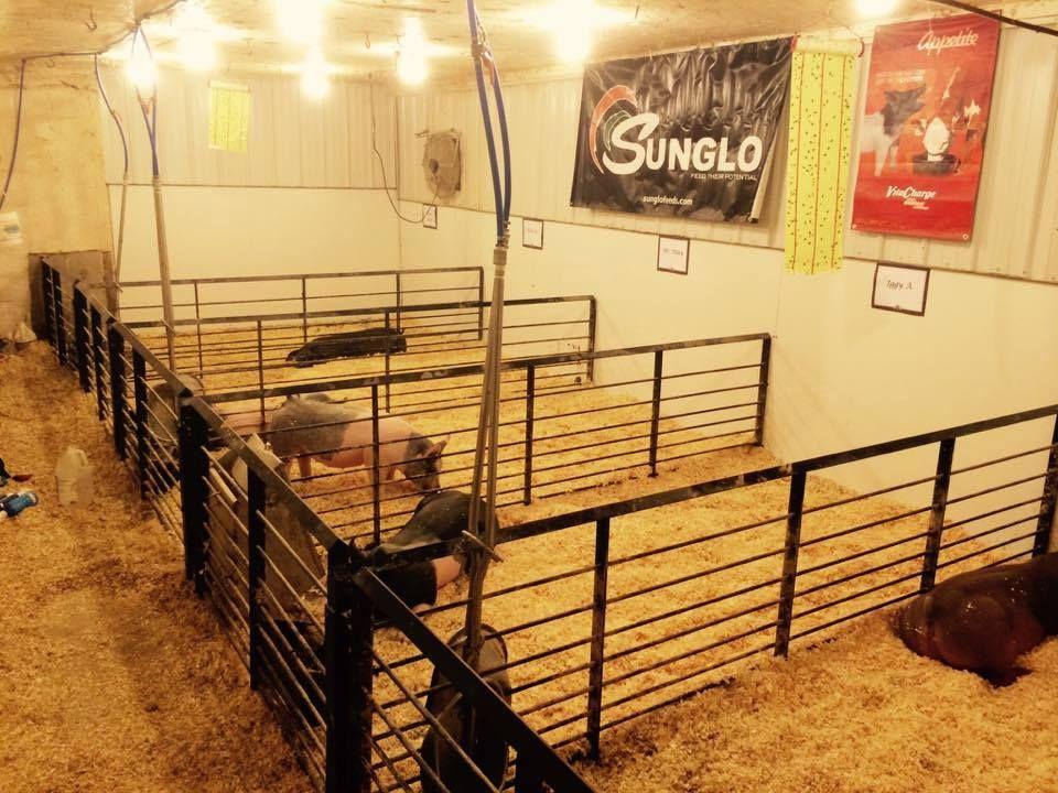 livestock for hog tag supplies feeders feeder sale wheel info big used
