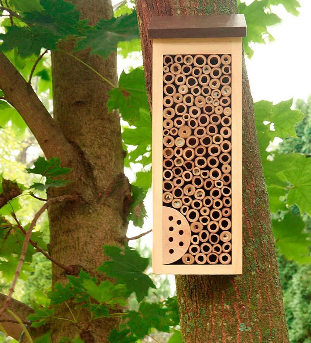 1 x BAMBOO SOLITARY NATIVE BEE LADYBIRDS AND LACEWING INSECT HOTEL-Brand New