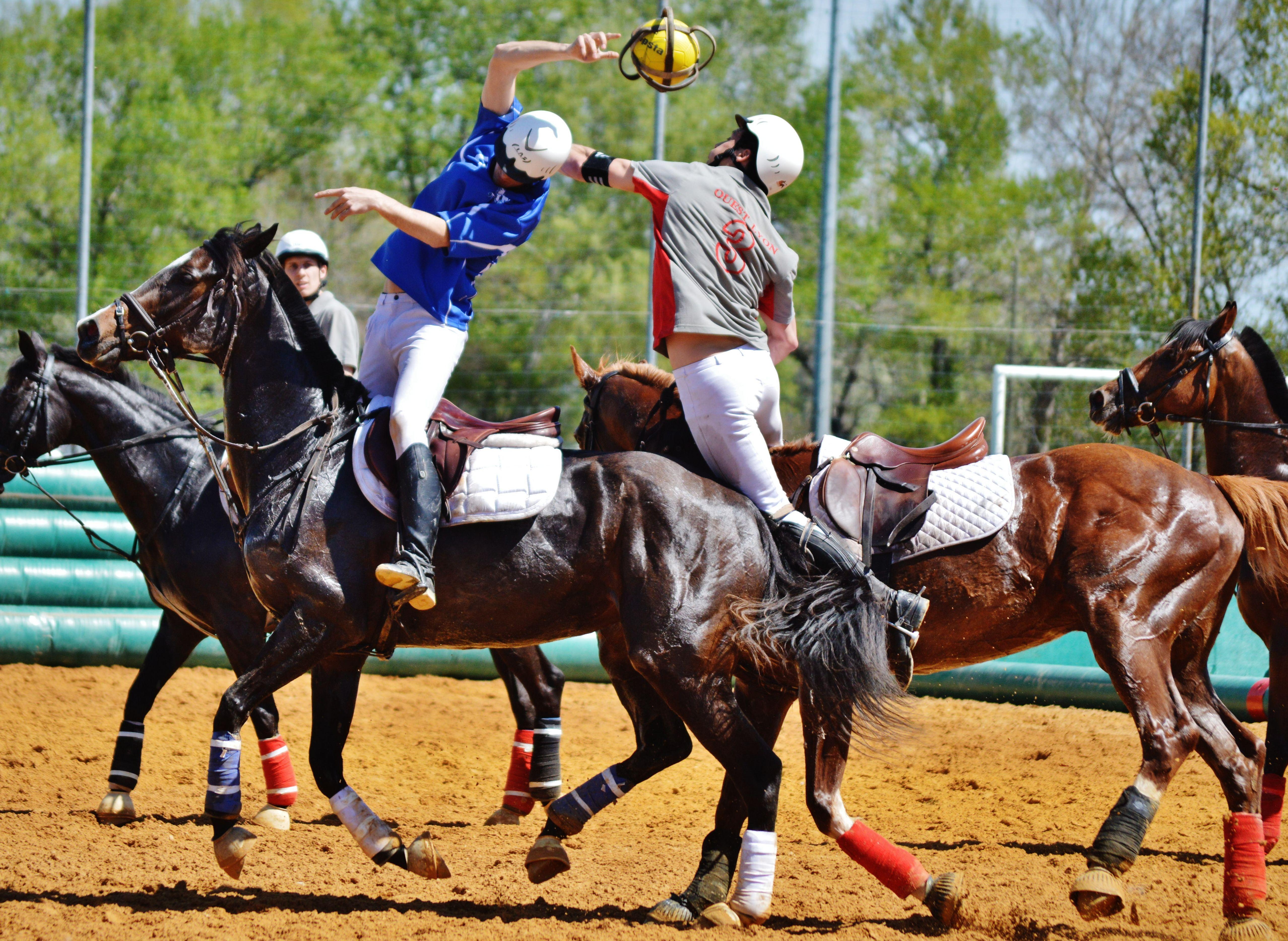 horseball   Share   Misc disciplines