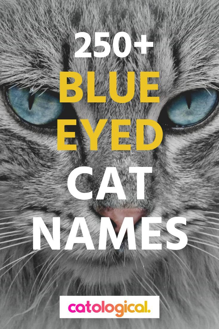 250 Of The Best Blue Eyed Cat Names For Male And Female Kitties In 2020 Cat Names Grey Cat Names
