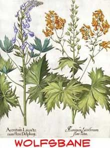 Wolfsbane Plant Drawings I Lovewant A Floral Tattoo Wolfsbane - Where does wolfsbane grow in the us map