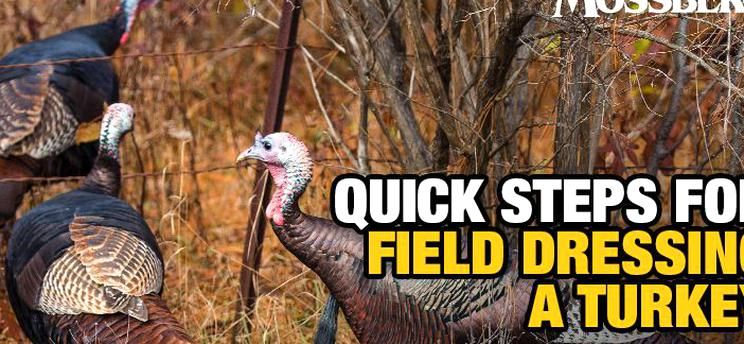 I Simply Love Fall Turkey Hunting It Isnt Just A Great Reason To Get Outside As The Fall Hunts Are Starting To Roll It Is An In 2020 Field Dressing Beautiful