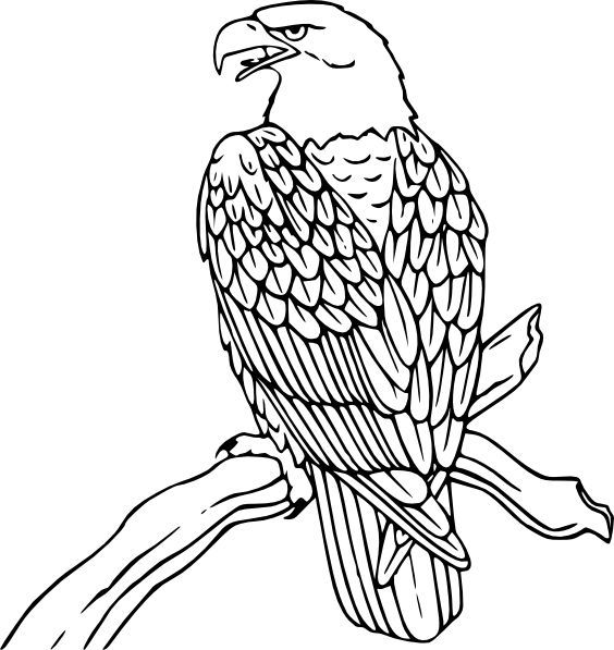 Image result for eagle drawings | Vitrales | Pinterest