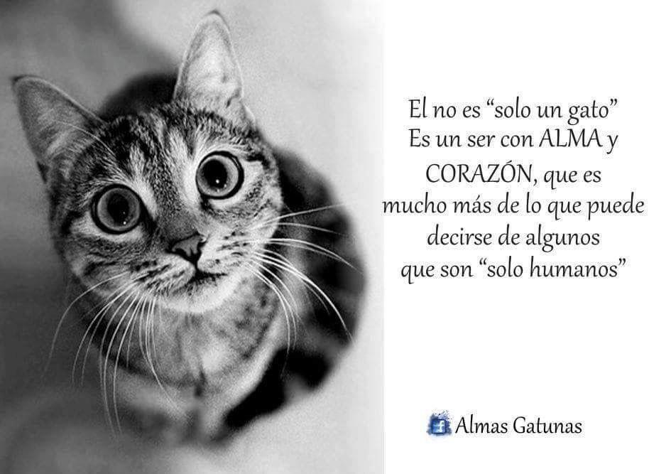 No Es Sólo Un Gato Citas Sobre Gatos Frases Gatos Y Gatos