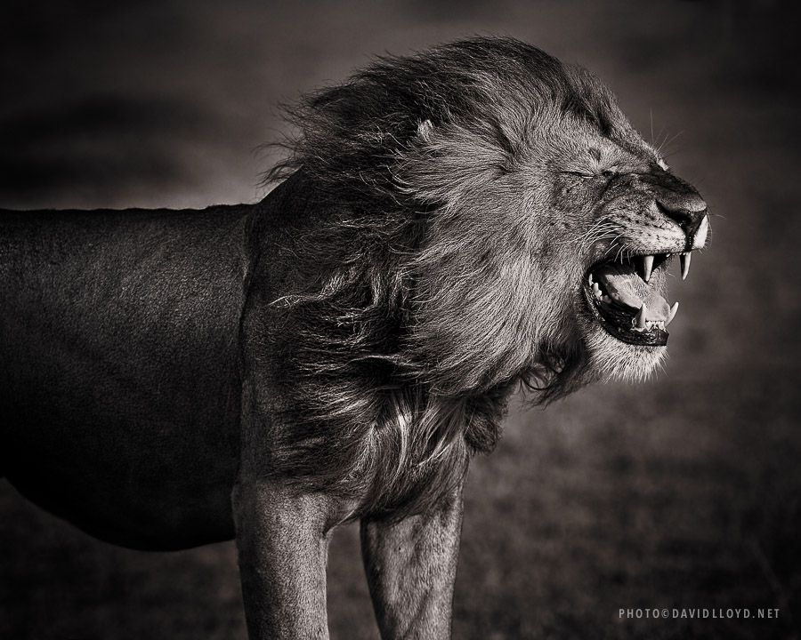 Black and White Selection David Lloyd Wildlife