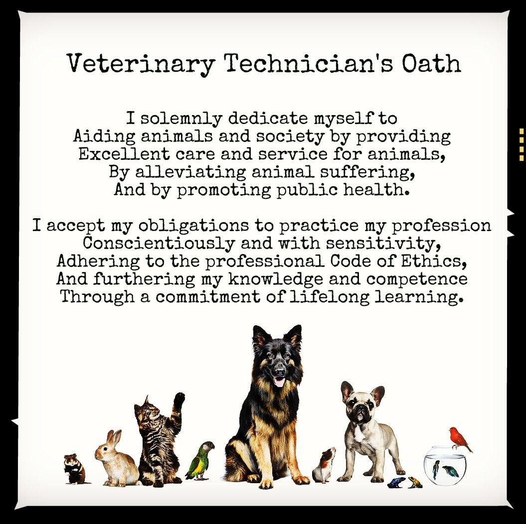 Vet Tech Quotes Vet Tech Oath  Veterinary Technology  Pinterest  Veterinary