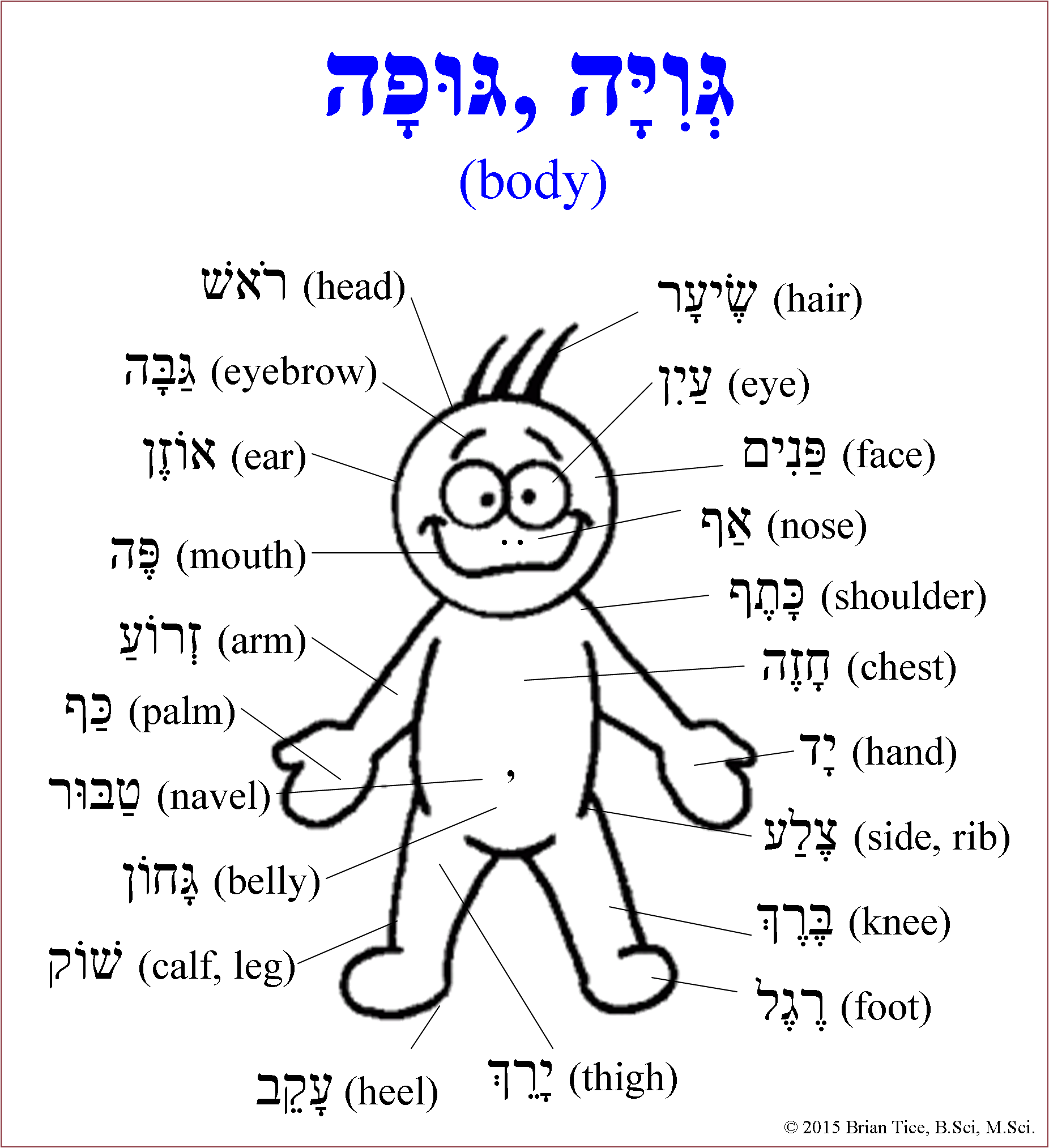 Hebrew Body Vocabulary With Images