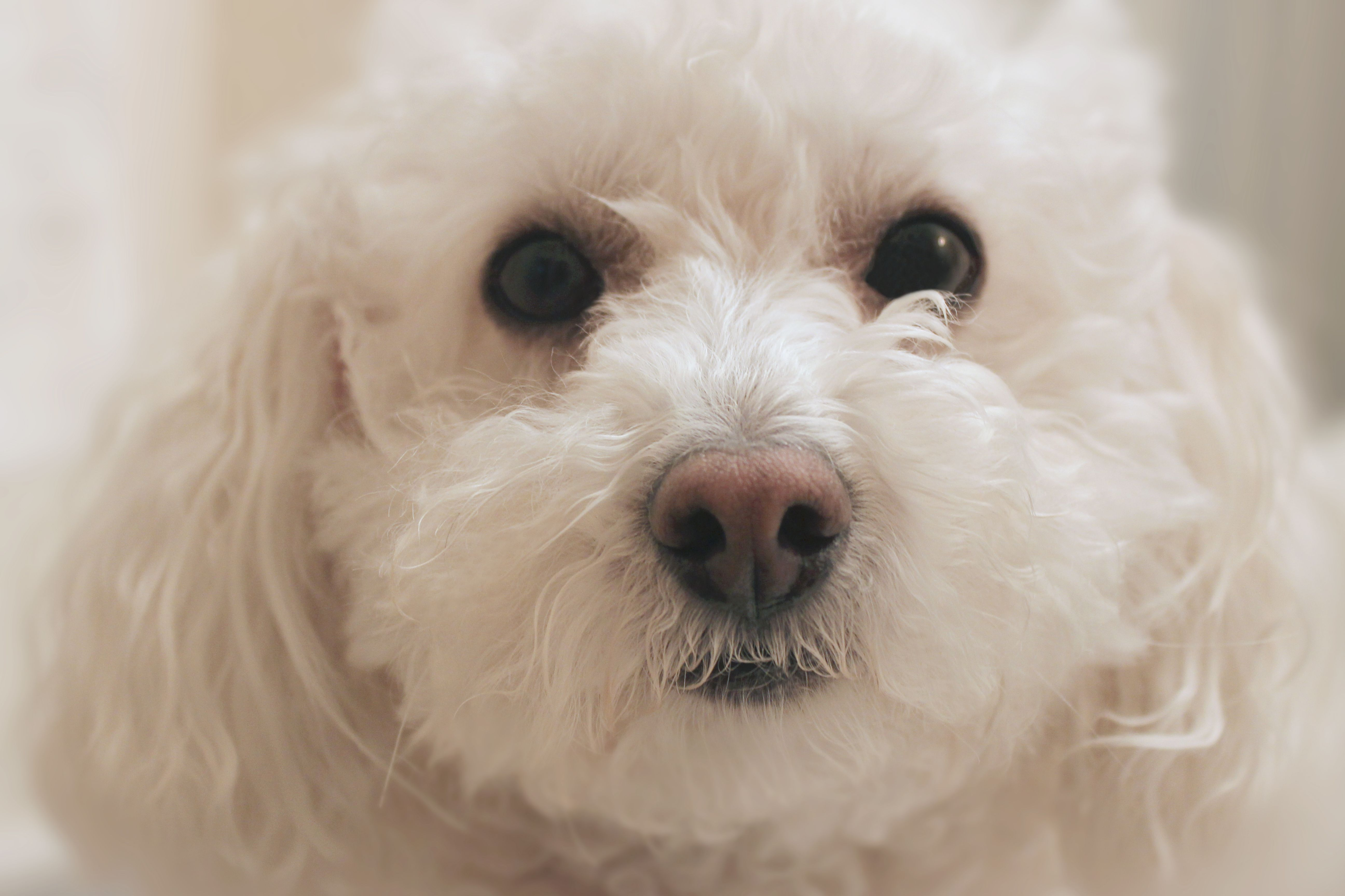 How to remove brown stains around dogs mouth with images