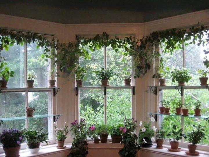 Bringing Houseplants Indoors Indoor Garden Garden Windows