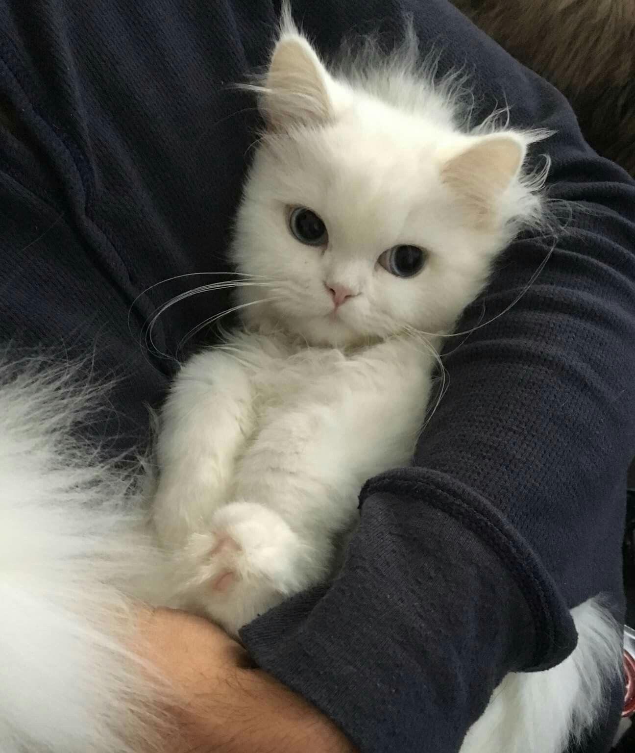 Couple Bilder Bett Snapchat Coupleswholift Coupleselfie Coupleswhotravel In 2020 Baby Animals Cats Cute Animals