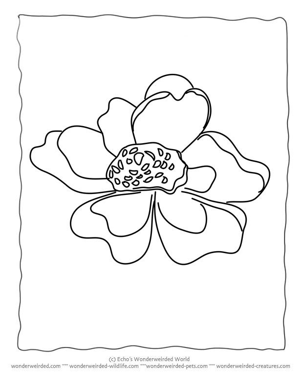 Flower Coloring Sheets Anemone
