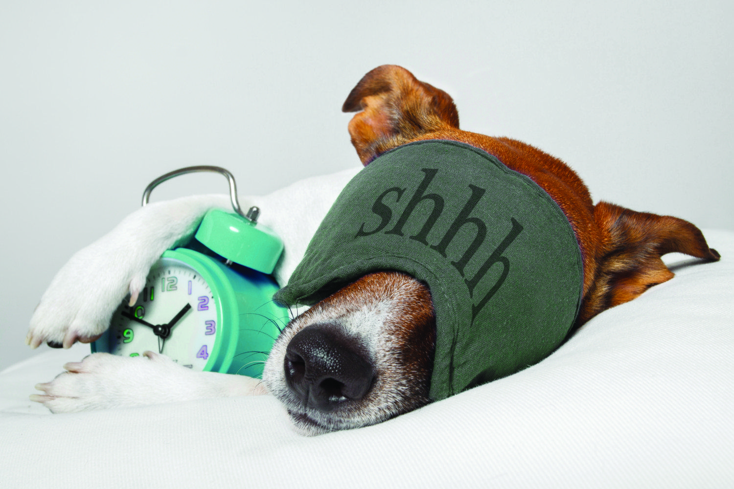 Pin by Holly Furney on Animalia Sleeping dogs, How to