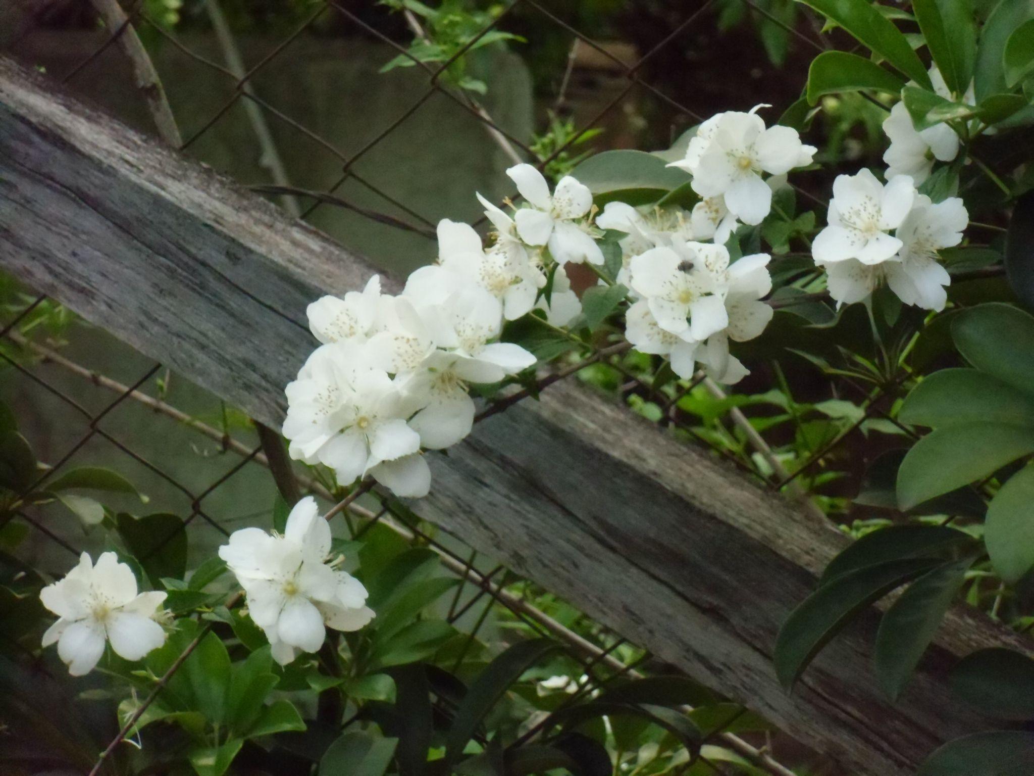 Essas flores estavam realmente lindas!